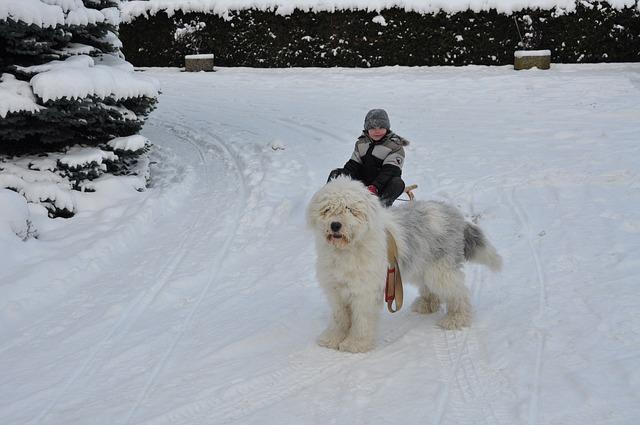 Adoptar un perro en Navidad