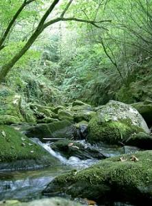 Parque Natural de las Fragas do Eume en A Coruña