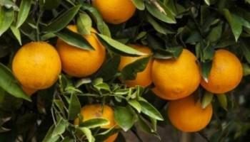 Naranjas de LaMejorNaranja