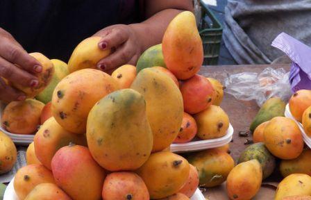 Mango africano propiedades adelgazantes y precauciones