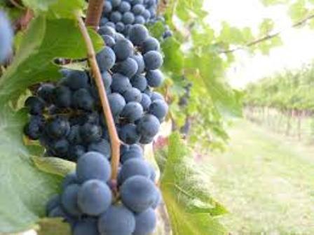 Enocosmética: el vino, un gran aliado de la cosmética natural