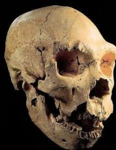 Mandíbula y cráneo encontrados en Atapuerca (imagen dominio público)