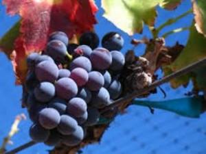 El vino, un aliado de la cosmética
