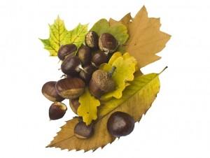 castañas, el fruto seco más ligero