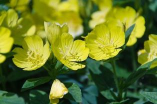 Cosmética bio y ecológica para pieles maduras
