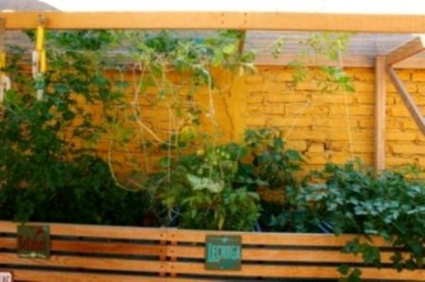 Huerto urbano, cómo cultivar en casa