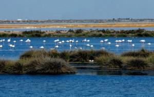 Reserva y Parque Natural de Doñana