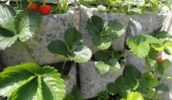 Huerto vertical soluci n al espacio para un huerto casero - Como hacer un huerto en el jardin ...