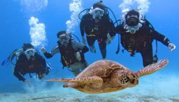 certified-divers-turtle – copia