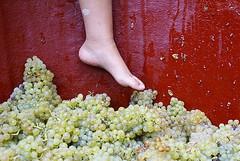 Cultura del Vino