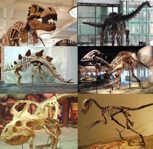 ¿Cuántas especies de dinosaurios existieron?