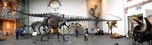 Diplodocus, Triceratops, Stegosaurus