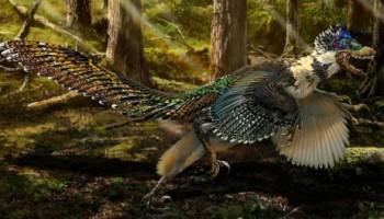 Velociraptor dinosaurio plumas china alas