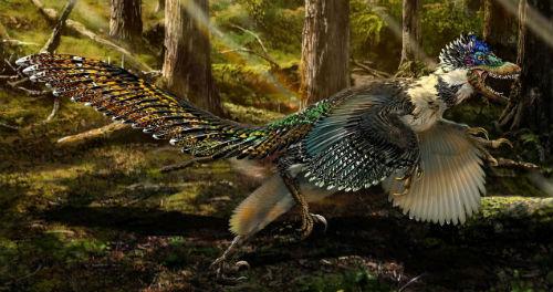 Hallan fósil de dinosaurio emplumado en China, similar al velociraptor