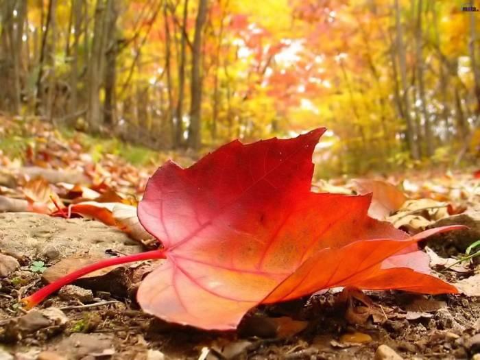 El otoño y las segundas oportunidades