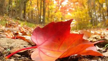 retomar relaciones de pareja en otoño.