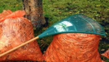 tareas jardin otoño