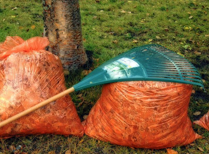 Tareas para realizar en el jardín en otoño
