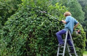 En otoño hay que preparar el jardín
