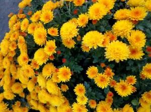 Descubre las mejores flores de otoño