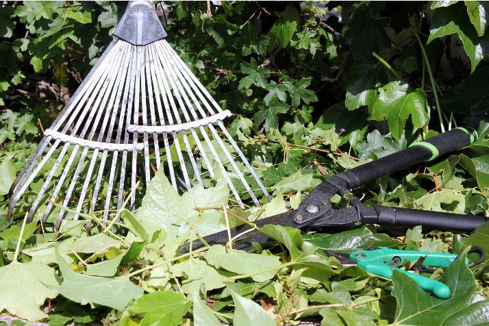 Herramientas de jardinería básicas para el jardín
