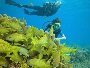 Submarinismo en las Islas Baleares