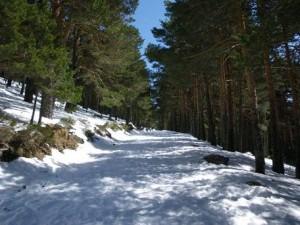Camino Laguna Peñalara