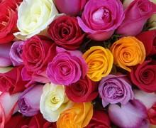 Regalar rosas online por Navidad