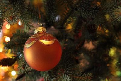El abeto como árbol de Navidad: origen, historia y leyenda