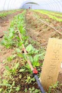 ¿Qué plantar en un huerto urbano casero?