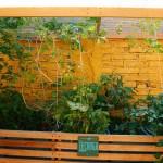 Huerto urbano casero, agricultura sin salir de casa