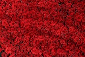rosasperfumes