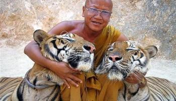 Un monje del Templo del Tigre acompañado por dos felinos