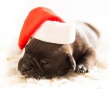perrito navideño