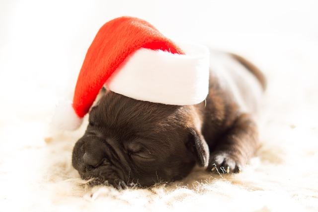 ¿Un compañero canino por navidad? Consejos previos