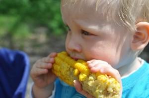 Un bebé rubio comiéndose una mazorca de maíz en el campo