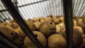 Qué hacer si ganas a la Loteria