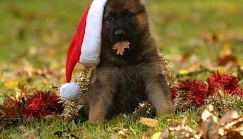 Cachorro en Navidad2