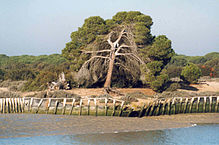 219px-Doñana_National_Park_from_the_river
