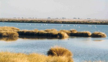 640px-Wetlands_in_Donana