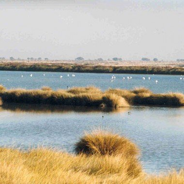 640px-Wetlands_in_Donana