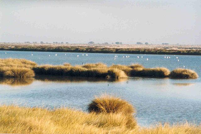 Doñana: aventura y naturaleza, ecosistemas y biodiversidad