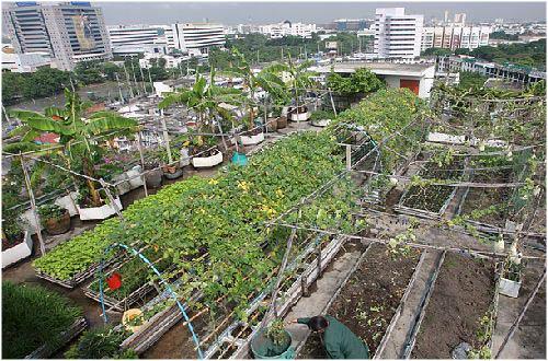 Consejos para el riego, el abono y la siembra en un huerto urbano