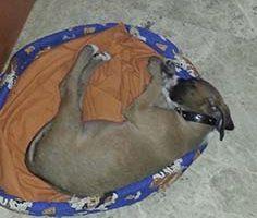 nuestro primer cachorro