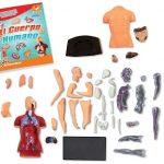 aprender anatomía juguete de ciencias