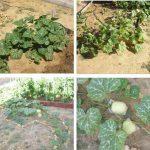 Calendario para el cultivo y recolección en un huerto urbano