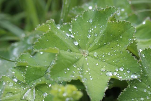 Fitoterapia, la medicina de las plantas