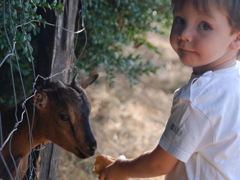 Mejores casas rurales granjas en España para ir con niños
