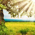 Consejos prácticos para sobrevivir a una oleada de calor