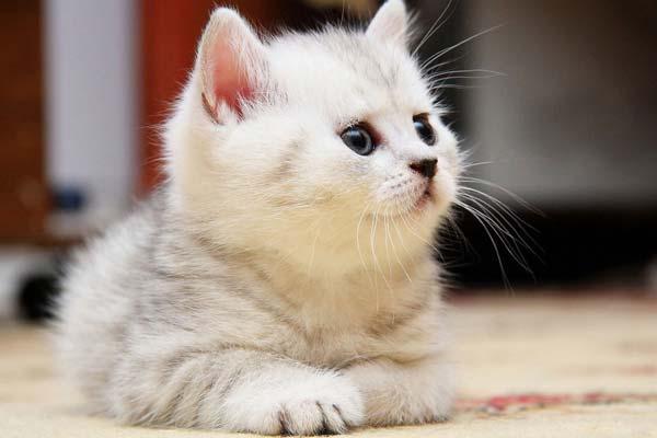 Los 10 accesorios imprescindibles para gatos